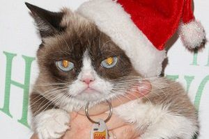 Grumpy Cat Death Cause and Date