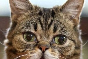 Lil Bub Death Cause and Date